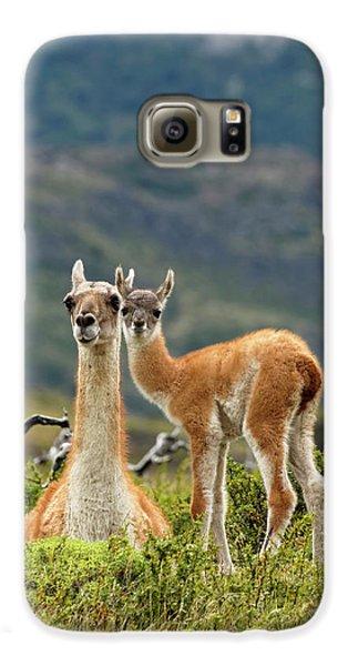 Llama Galaxy S6 Case - Guanaco And Baby (lama Guanaco by Adam Jones