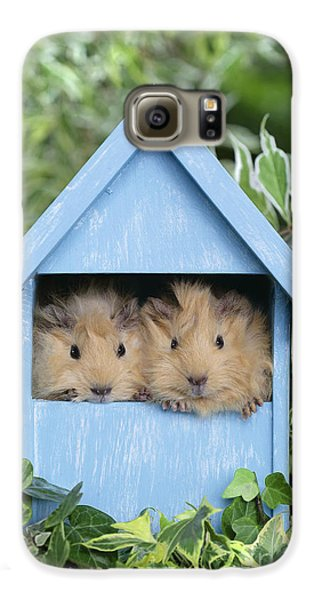 Guinea Pig In House Gp104 Galaxy S6 Case by Greg Cuddiford