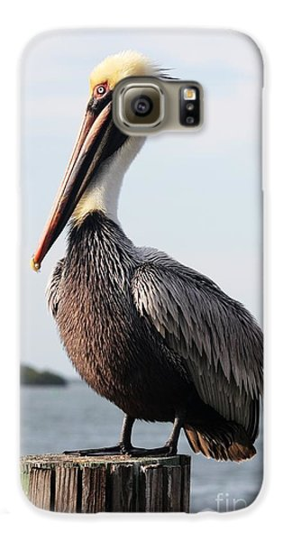 Pelican Galaxy S6 Case - Handsome Brown Pelican by Carol Groenen