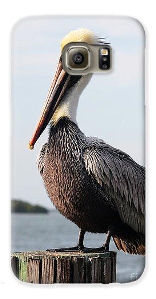 Handsome Brown Pelican Galaxy S6 Case by Carol Groenen