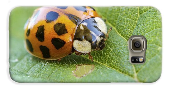 Harlequin Ladybird Galaxy S6 Case by Heath Mcdonald