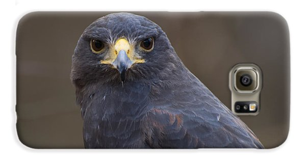 Harris Hawk Galaxy S6 Case