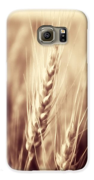 Harvest Time Galaxy S6 Case