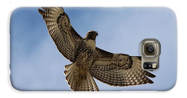 Hawk In Flight  Galaxy S6 Case