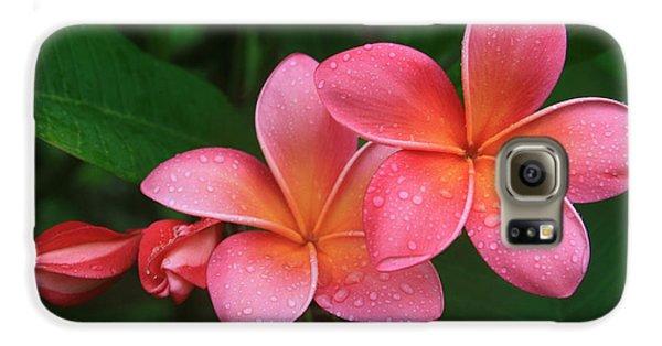 He Pua Laha Ole Hau Oli Hau Oli Oli Pua Melia Hae Maui Hawaii Tropical Plumeria Galaxy S6 Case