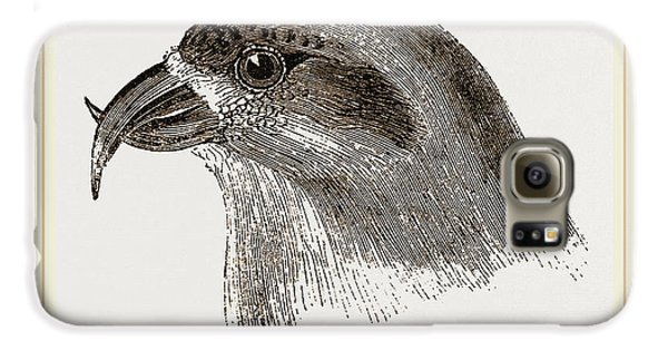 Head Of Crossbill Galaxy S6 Case by Litz Collection