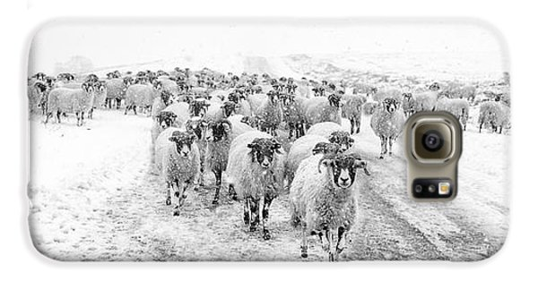 Sheep Galaxy S6 Case - Heading For Home by Janet Burdon