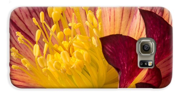 Hellebore Ruby Yellow Glow Galaxy S6 Case