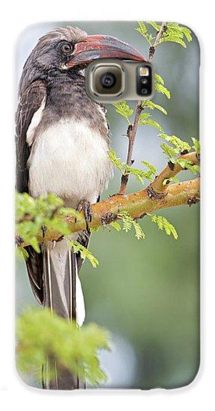 Hornbill Galaxy S6 Case - Hemprich's Hornbill by Tony Camacho