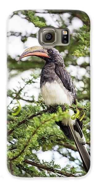 Hornbill Galaxy S6 Case - Hemprichs's Hornbill (tockus Hemprichii) by Peter J. Raymond