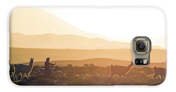Llama Galaxy S6 Case - Herd Of Llamas Lama Glama In A Desert by Panoramic Images