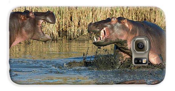 Hippopotamus Confrontation Galaxy S6 Case by Tony Camacho