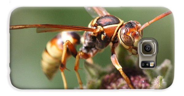 Galaxy S6 Case featuring the photograph Hornet On Flower by Nathan Rupert