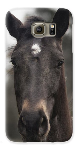 Horse With Gentle Eyes Galaxy S6 Case