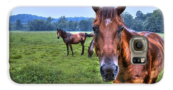 Horses In A Field Galaxy S6 Case