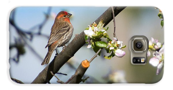 House Finch Galaxy S6 Case by Mike Dawson