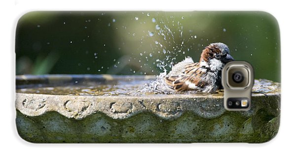 House Sparrow Washing Galaxy S6 Case by Tim Gainey