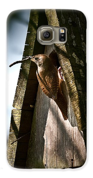 House Wren At Nest Box Galaxy S6 Case by  Onyonet  Photo Studios