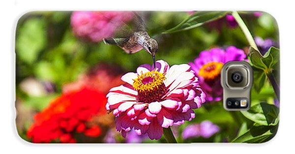 Garden Galaxy S6 Case - Hummingbird Flight by Garry Gay