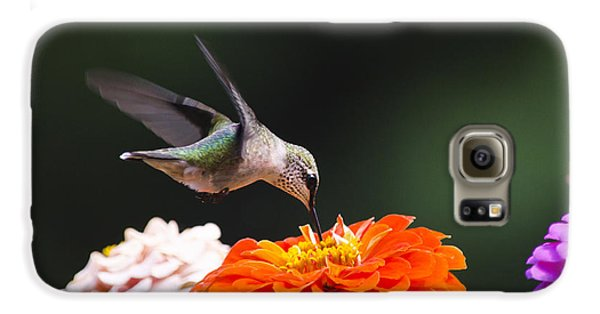 Hummingbird In Flight With Orange Zinnia Flower Galaxy S6 Case