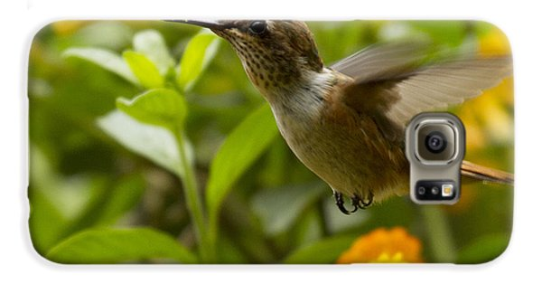 Hummingbird Looking For Food Galaxy S6 Case by Heiko Koehrer-Wagner