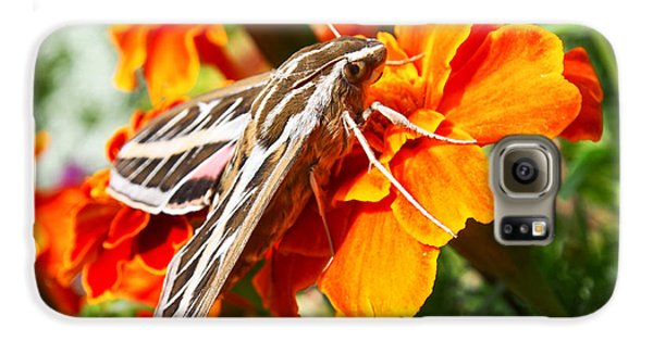 Hummingbird Moth On A Marigold Flower Galaxy S6 Case