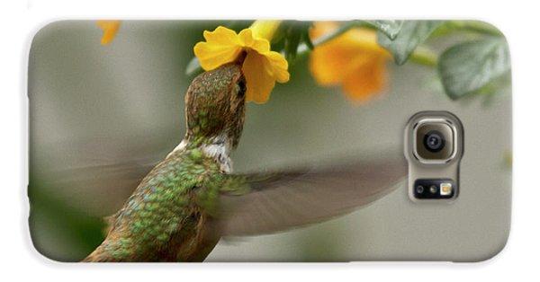 Hummingbird Sips Nectar Galaxy S6 Case