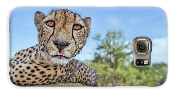 Hungry Cheetah Galaxy S6 Case