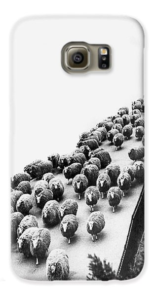 Hyde Park Galaxy S6 Case - Hyde Park Sheep Flock by Underwood Archives