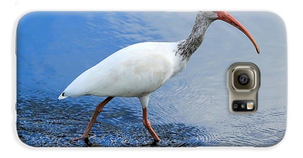 Ibis Visitor Galaxy S6 Case by Carol Groenen