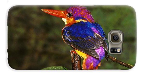India Three Toed Kingfisher Galaxy S6 Case