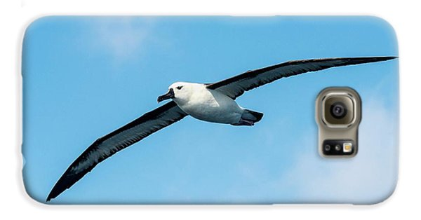 Indian Ocean Yellow-nosed Albatross Galaxy S6 Case by Peter Chadwick