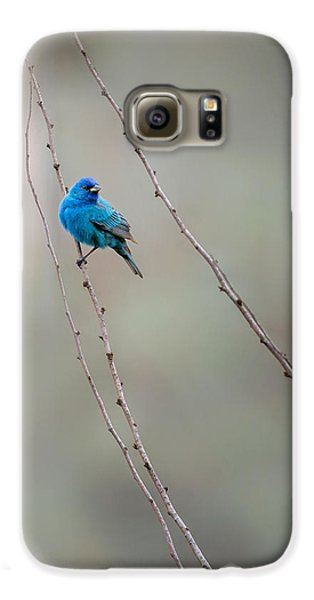 Indigo Bunting Galaxy S6 Case by Bill Wakeley