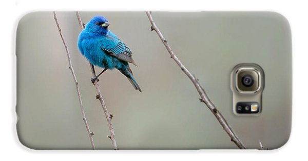 Indigo Bunting Square Galaxy S6 Case by Bill Wakeley