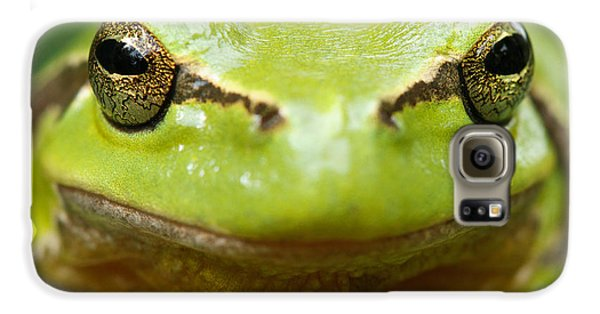 It's Not Easy Being Green _ Tree Frog Portrait Galaxy S6 Case by Roeselien Raimond
