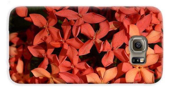 Decorative Galaxy S6 Case - Ixora Red by Sanjay Ghorpade