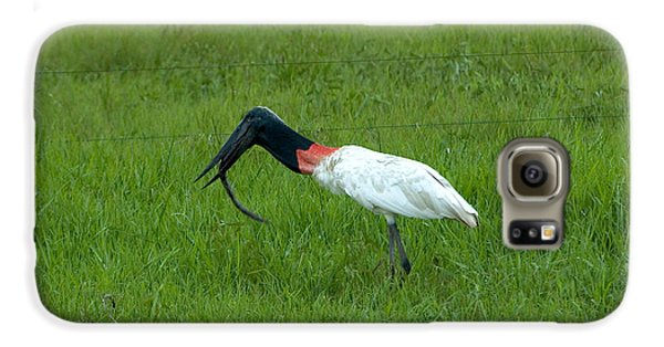 Jabiru Stork Swallowing An Eel Galaxy S6 Case