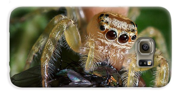 Jumping Spider 3 Galaxy S6 Case