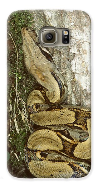 Juvenile Boa Constrictor Galaxy S6 Case by Gregory G. Dimijian, M.D.