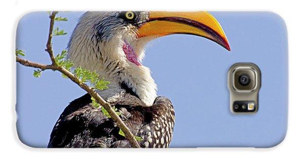 Hornbill Galaxy S6 Case - Kenya Profile Of Yellow-billed Hornbill by Jaynes Gallery