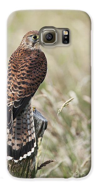 Kestrel Galaxy S6 Case by Tim Gainey