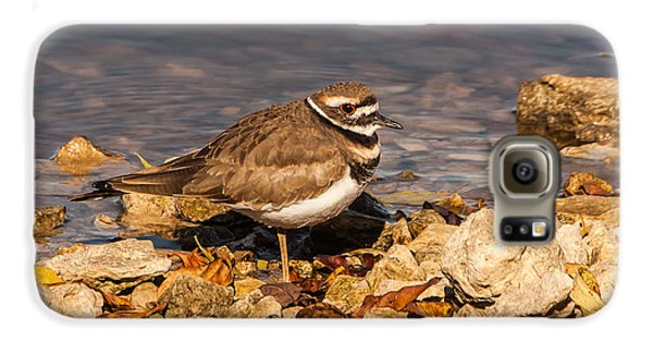 Kildeer On The Rocks Galaxy S6 Case by Robert Frederick