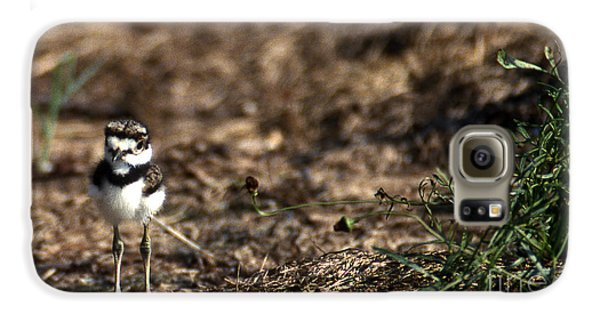 Killdeer Chick Galaxy S6 Case by Skip Willits