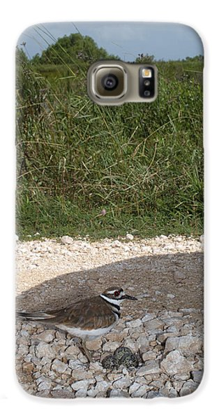 Killdeer Defending Nest Galaxy S6 Case by Gregory G. Dimijian