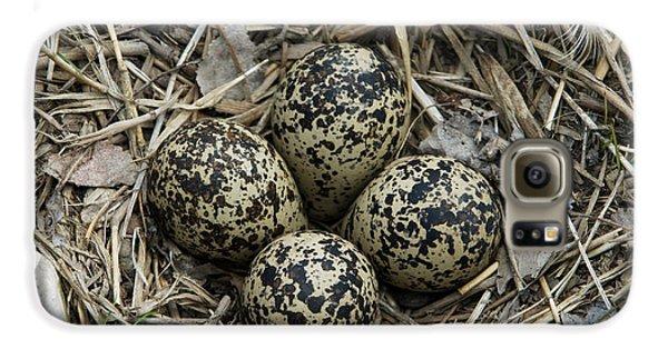 Killdeer Galaxy S6 Case - Killdeer Eggs In Nest by Linda Freshwaters Arndt