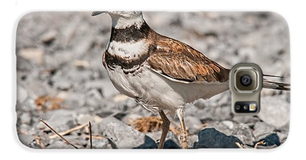 Killdeer Nesting Galaxy S6 Case by Lara Ellis
