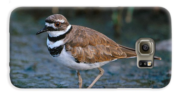 Killdeer Galaxy S6 Case by Paul J. Fusco