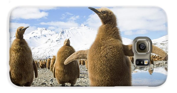 King Penguin Chicks South Georgia Island Galaxy S6 Case by Yva Momatiuk and John Eastcott