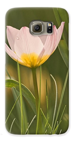 Kissed By The Morning Galaxy S6 Case