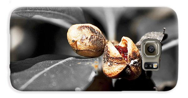 Galaxy S6 Case featuring the photograph Knew Seeds Of Complentation by Miroslava Jurcik
